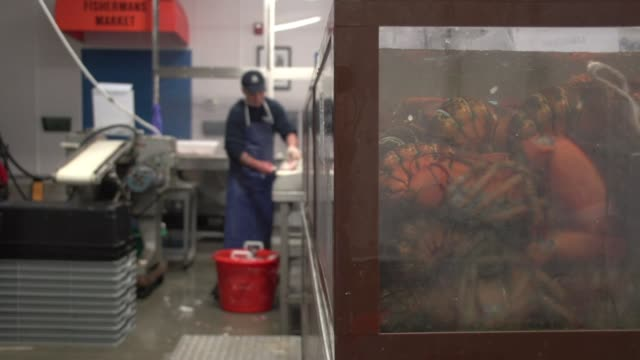 view from behind counter as employees sell fish to customers at fish market - mollusk stock videos & royalty-free footage