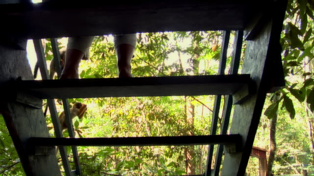 vidéos et rushes de view from behind stairs of person feeding common squirrel monkeys / the amazon, brazil - petit groupe d'animaux