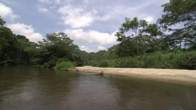 vídeos y material grabado en eventos de stock de view from boat travelling up river don diego past sandy beach, sierra nevada, colombia - río
