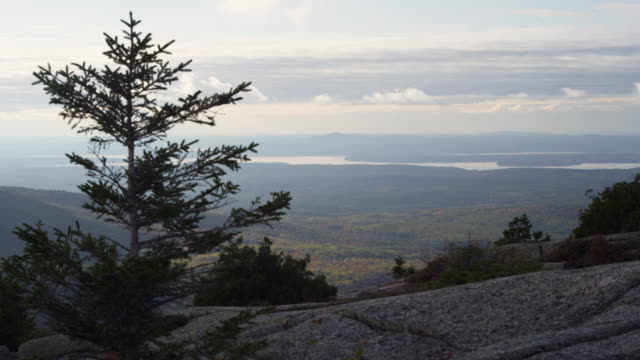 view from caddillac mountain in acadia nation al park with pine tree in foreground. - pine tree stock videos & royalty-free footage
