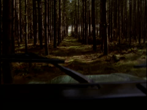 View from car as it drives through pine forest Thetford UK
