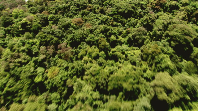 ws aerial view from jungle to sao paulo city (wipe) / sao paulo, brazil - rainforest stock videos & royalty-free footage