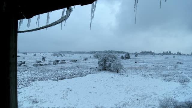 view from observation tower - landscape - hautes fagnes - under snow - 40 sekunden oder länger stock-videos und b-roll-filmmaterial