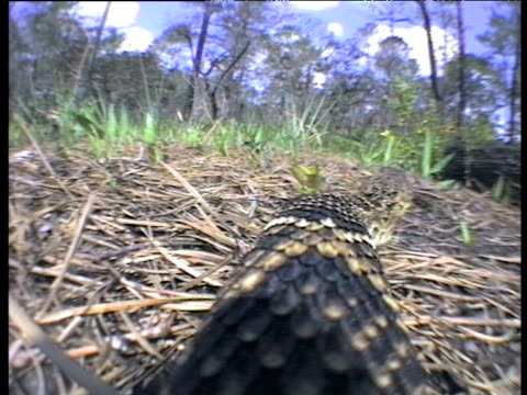 view from onboard camera as eastern diamond backed rattlesnake slithers over log - rau stock-videos und b-roll-filmmaterial