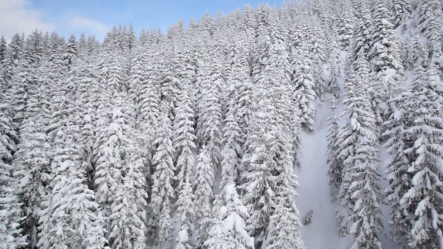 pov view from overhead cable car moving over snow covered trees, russbach, salzburg, austria - russbach stock videos and b-roll footage