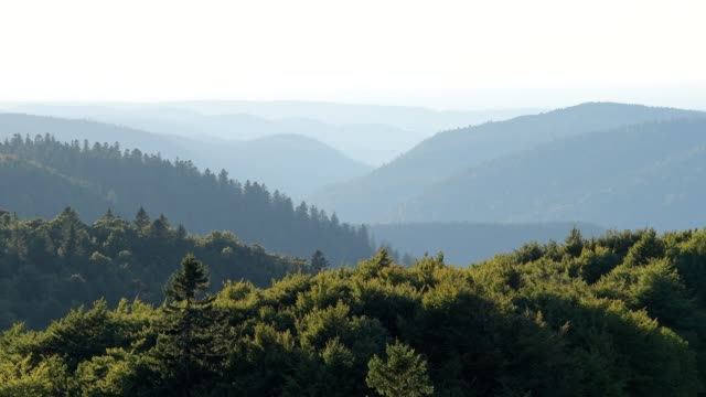 view from road (route des cretes) at landscape in summer, la bresse, route des cretes, vosges, france - lorraine stock videos & royalty-free footage