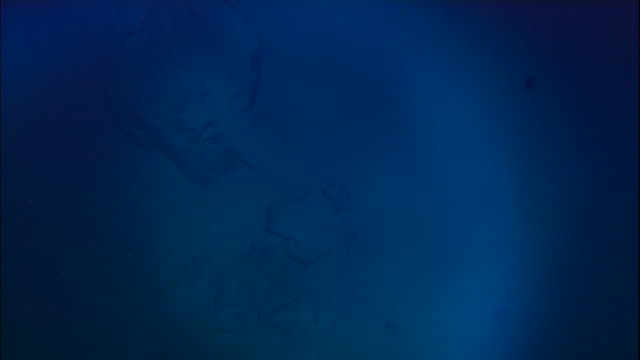 View from submersible of deep sea floor, Mid Atlantic Ridge
