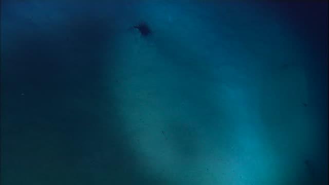 view from submersible of deep sea floor, mid atlantic ridge - ravine stock videos & royalty-free footage