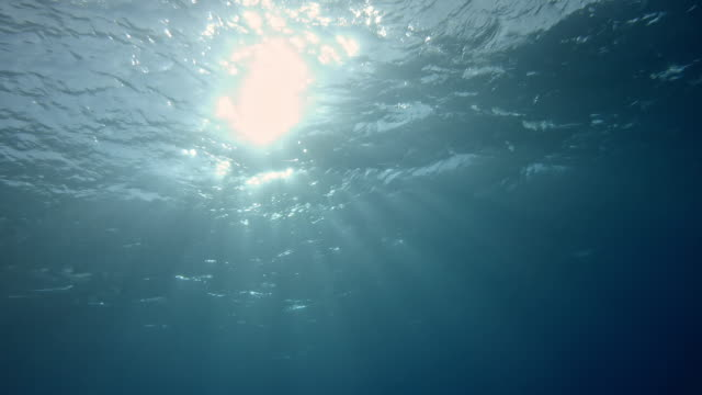view from the depth of under water to surface into the sun with light beams - pelagic zone stock videos & royalty-free footage