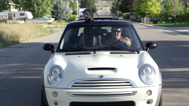 View from the front of a Mini Cooper driving down the road with a Great Dane sitting with head out of the sunroof.