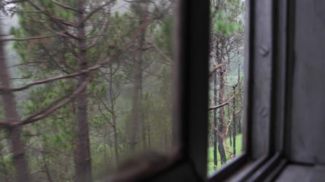 view from the window old vintage train with focus shift from window to landscape and back, of the greenery around - british rail stock videos & royalty-free footage