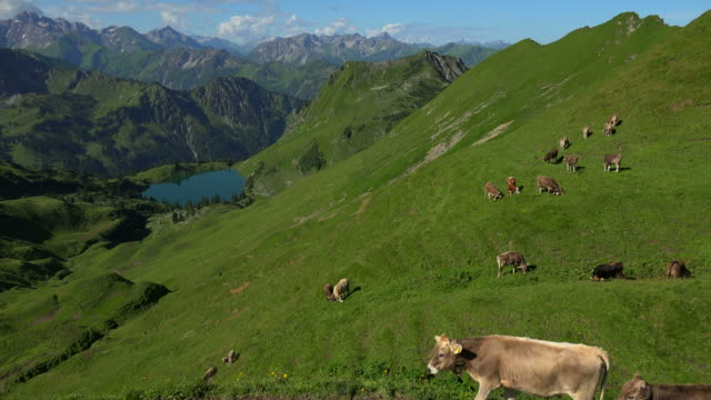 vidéos et rushes de view from zeigersattel to lake seealp with the allgaeu alps at nebelhorn area near oberstdorf, allgaeu, swabia, bavaria, germany - troupeau