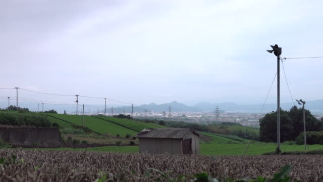 view green field in japan - agricultural activity stock videos & royalty-free footage
