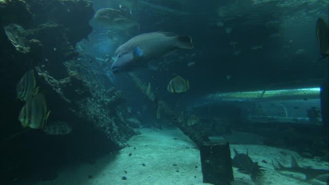 CU View in aquarium / Australia