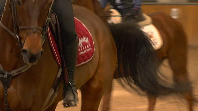 view inside racehorse training stables in china - saddle stock videos & royalty-free footage
