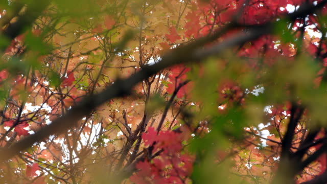 view looking though leaves in the fall from slider - プロボ点の映像素材/bロール