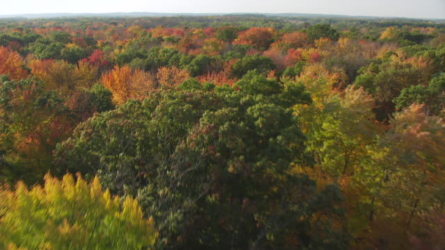 MS AERIAL View low over colored trees in Marquette County / Wisconsin, United States