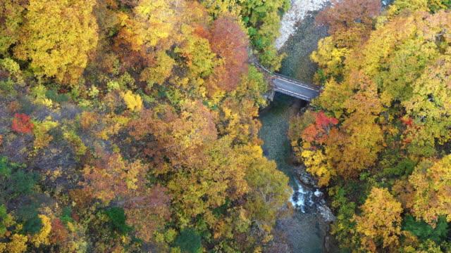 view mountain of jogakura gorge in autumn season, aomori, japan - aomori prefecture stock videos & royalty-free footage
