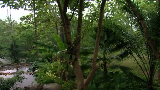 view of a densely forested landscape under a downpour of rain among the foliage is a banana tree - tropical tree stock videos & royalty-free footage