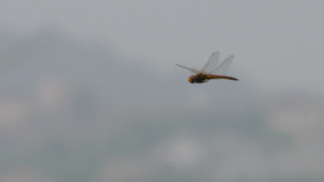 view of a dragonfly flying in the sky - dragonfly stock videos & royalty-free footage