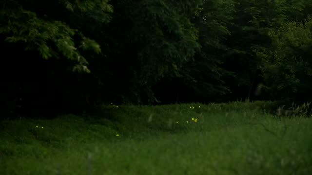 View of a firefly in Gotjawal forest