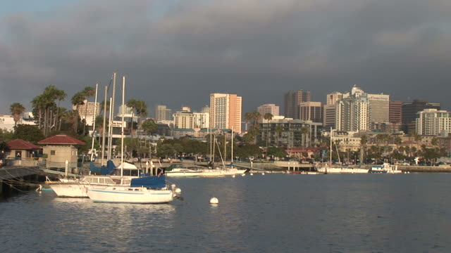 view of a harbor in san diego united states - fan palm tree stock videos & royalty-free footage