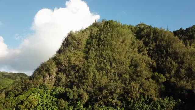 view of a hill covered with tree - huahine island stock videos and b-roll footage