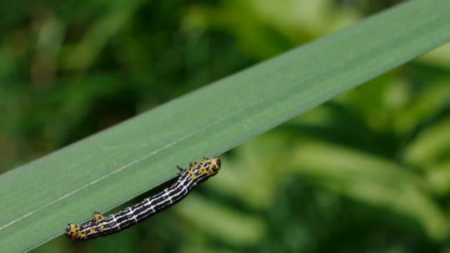 view of a j-bug crawling on the blade of grass - blade of grass stock videos & royalty-free footage