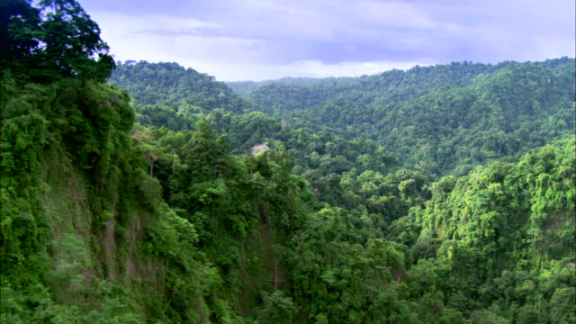 view of a jungle in madagascar - rainforest stock videos & royalty-free footage