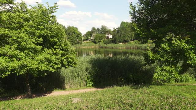 view of a little pond at botanischer garten in frankfurt (oder), brandenburg, germany. - pond stock videos & royalty-free footage