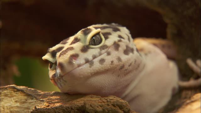 View of a Lizard