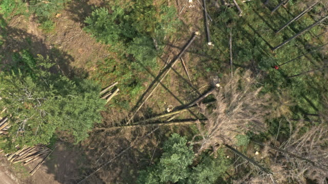 aerial view of a logging site with a tree falling down - tagliaboschi video stock e b–roll