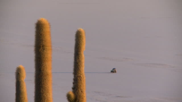 view of a moving car behind  cacti, uyuni, bolivia - cactus silhouette stock videos & royalty-free footage