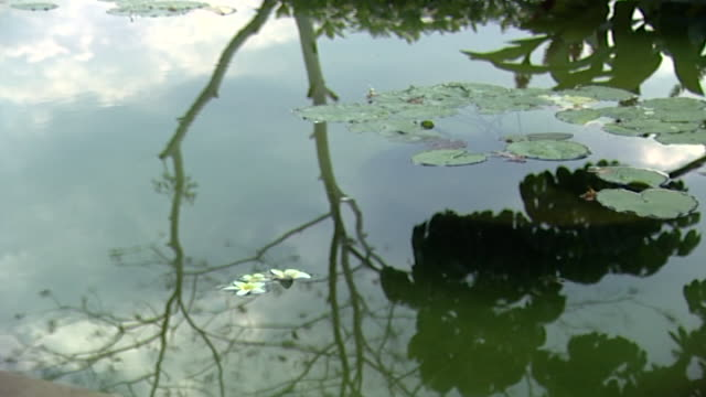 view of a pool with lily pads scattered across its surface reflecting the sky surrounding garden - lily stock videos & royalty-free footage
