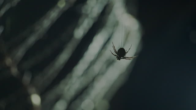 vidéos et rushes de view of a spider hang from barbed-wire fence at night in dmz (demilitarized zone, a strip of land running across the korean peninsula), south korea - toile d'araignée