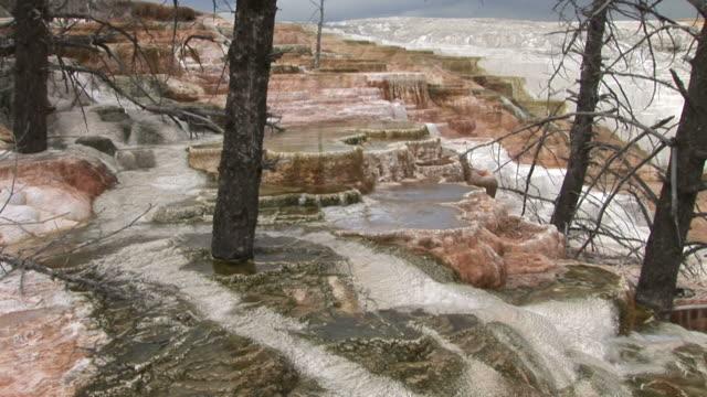 view of a stream in yellowstone national park in united states - kvist bildbanksvideor och videomaterial från bakom kulisserna