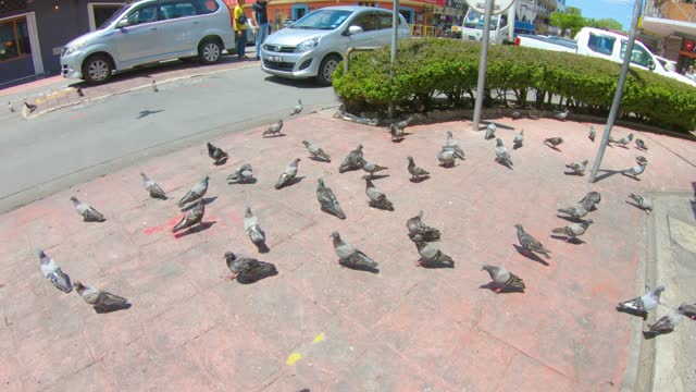 view of a street in kota kinabalu - report produced segment stock videos & royalty-free footage