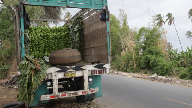 vidéos et rushes de view of a truck which is loaded with banana benches which were harvested before - bananier