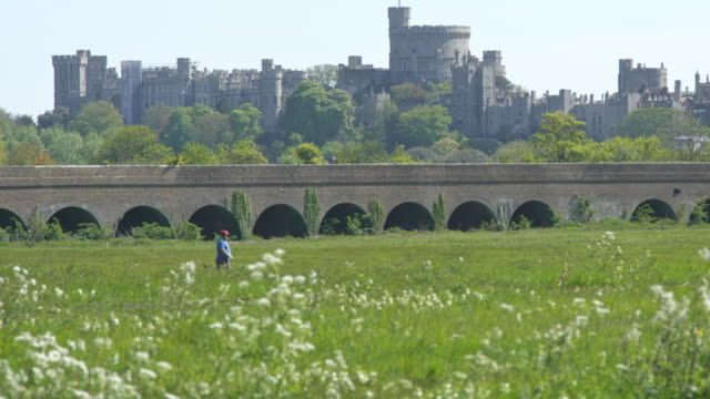 a view of a windsor resident exercising in an eton meadow with windsor castle in the background where queen elizabeth will be selfisolating during... - meadow stock videos & royalty-free footage