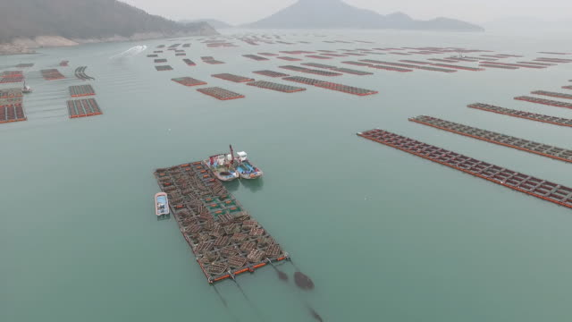 view of abalone farm and nautical vessel in wando, jeollanam-do - rectangle stock videos & royalty-free footage