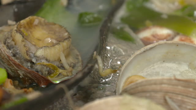 view of abalone on clam shell in clam jeongol(clam hot pot in south korea) - clam seafood stock videos and b-roll footage