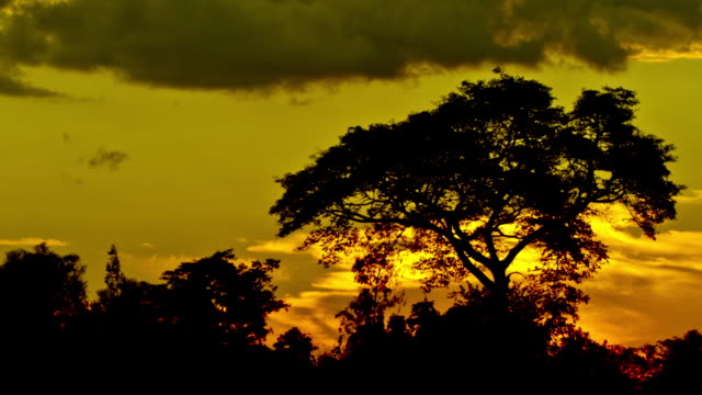 MS T/L View of acacia sunset / Kilimanjaro, Kenia