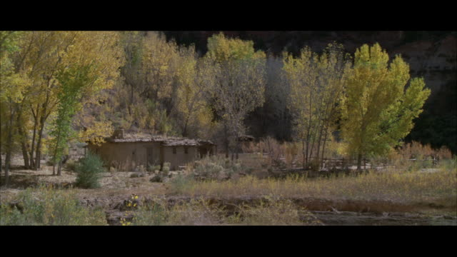 ws view of adobe cabin nestled among aspen trees / unspecified  - aspen tree stock videos & royalty-free footage
