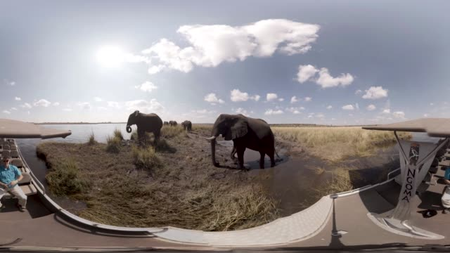 vr view of african elephants in botswana - equirectangular panorama stock videos & royalty-free footage