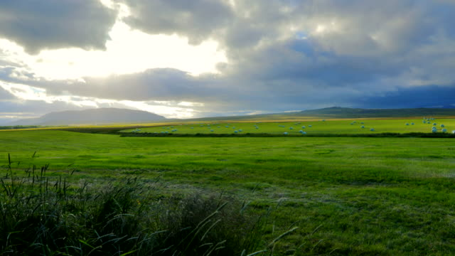 View of Agricultural grazing Land in Iceland