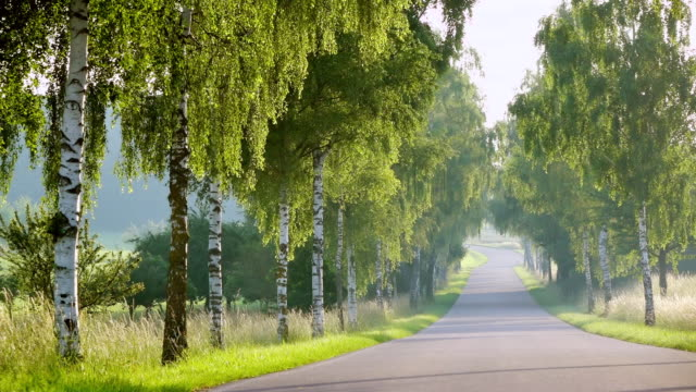 WS View of alley of trees in morning light / Perl, Saarland, Germany