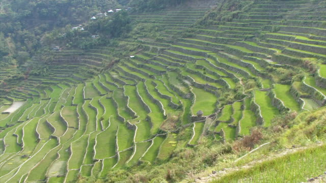 ws pan view of ancient rice terraces / luzon, philippines - luzon stock videos & royalty-free footage