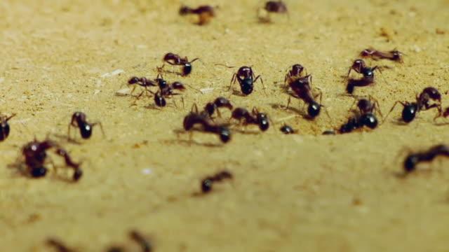 CU View of ants, Farrukh Nagar / Gurgaon, Haryana, India
