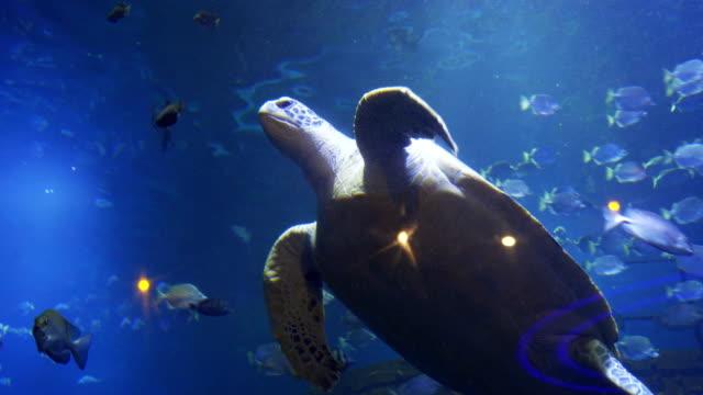 vídeos de stock, filmes e b-roll de vista do aquário - yucatán