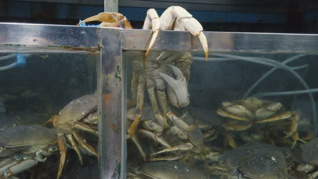 view of aquatic market - crab stock videos & royalty-free footage